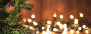 Spruce Tree branch on Wood Background and defocused lights.